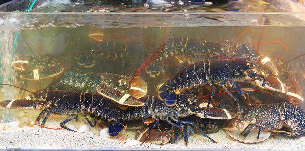 Retail Seafood | Fresh Seafood for Sale | Brockton, MA