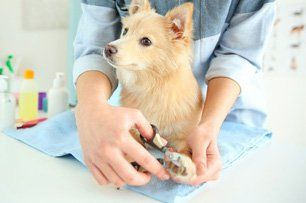 Pet Care Forms Pampered Pets Inn Spa