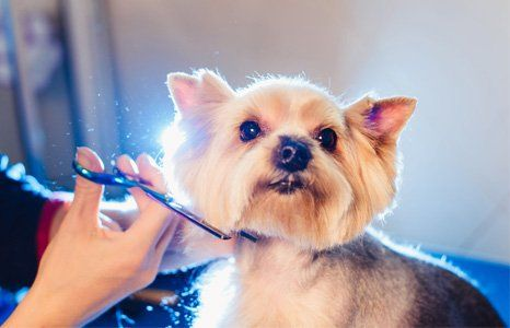 About Pampered Pets Inn Spa Asheville Nc Pet Care