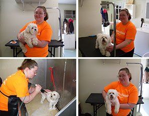 Dog Grooming Tolland Ct