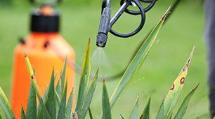 spraying plants
