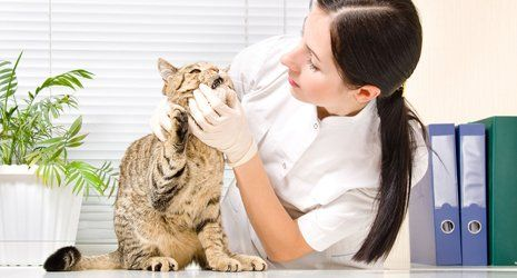 South Western Pet Clinic | Veterinary | Oklahoma City, OK