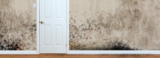 And Can Be Found Behind Your Drywall Or Under Carpets If You Smell A Strong Musty Odor May Have Health Risk From Black Mold So Call Now