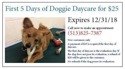 Animal Ark Pet Resort Coupons Cincinnati Oh