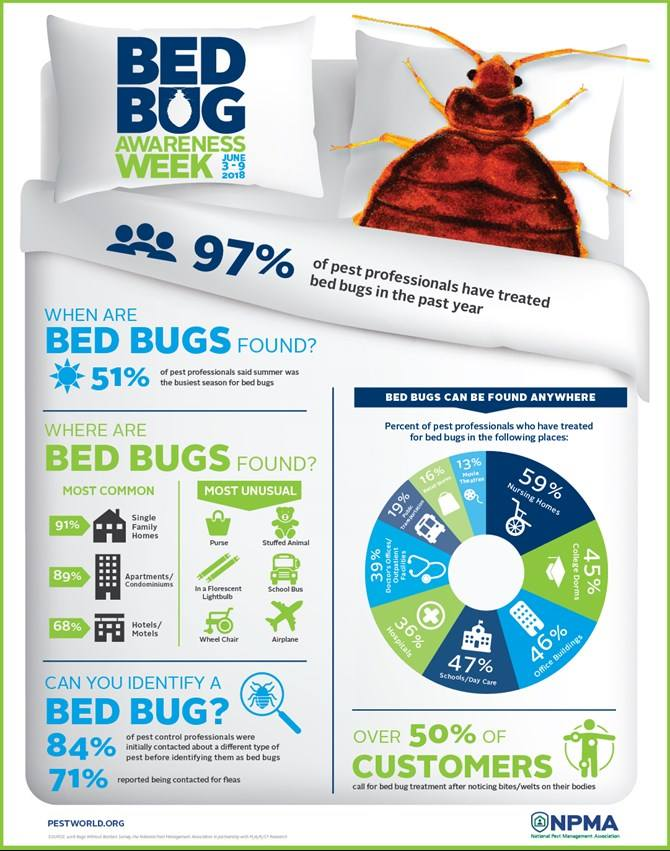 Closeup Bed Bug