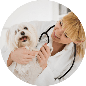 Veterinary service