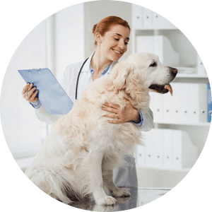 Veterinary appointments