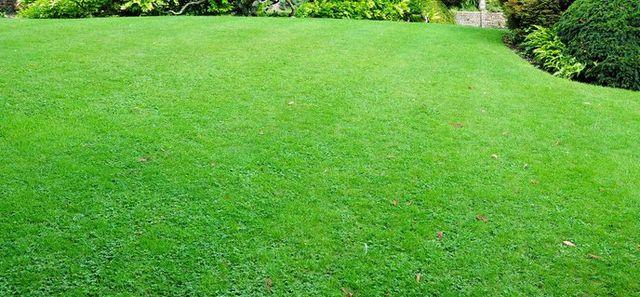 Well fertilized lawn