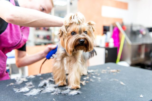 Lucky 3 Dog Cat Grooming Pet Grooming Baltimore Md