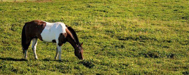 Nutrena Horse Feed | Foal Supplements | Terre Haute, IN
