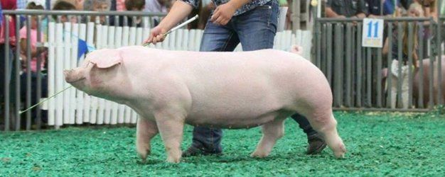 Livestock Nutrition | Sunglo Feeds | Terre Haute, IN