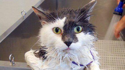 Muddy paws diy dog wash inc pet washing vancouver wa cat wash solutioingenieria Images
