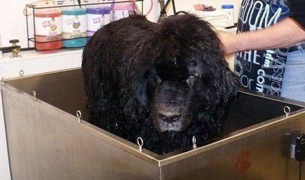 About muddy paws diy dog wash inc vancouver wa dog washing dog wash solutioingenieria Choice Image