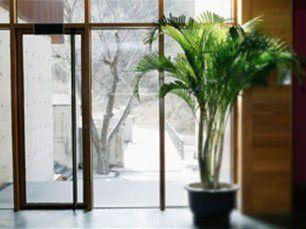 Plant in front of glass door