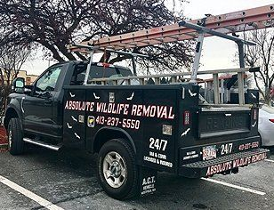 Absolute Wildlife Removal  Truck
