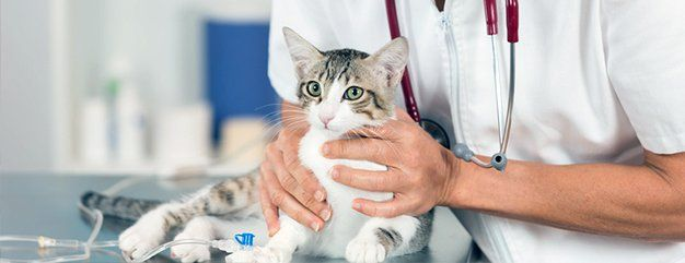 Veterinary diagnostic