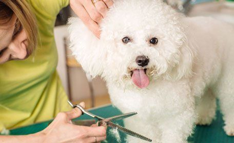 Grooming dog with tool for shedding hair