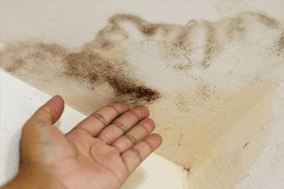 Mold damage
