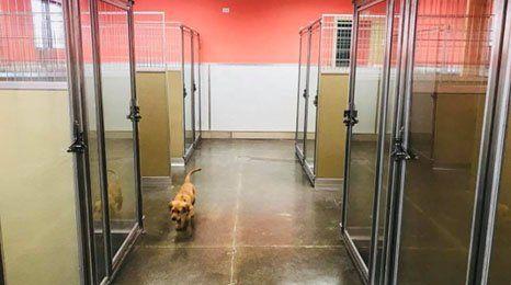 Idaho Dog Park | Dog Daycare And Boarding | Boise, ID