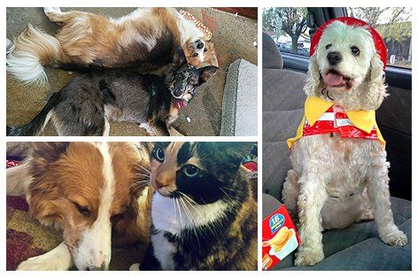 Susan Pickford's pets