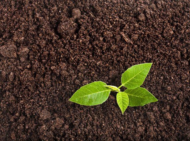 Screened topsoil, Glenn Mills PA