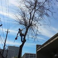 Industrial Tree Services Power Lines Magnolia Tx
