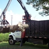 Tree Removal Services Firewood Cutting Magnolia Tx