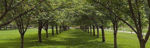 Tree Care Info Tree Care Tips Washington Ut