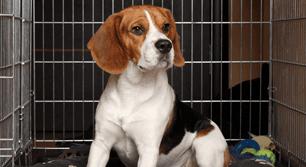Clean Dog Kennel