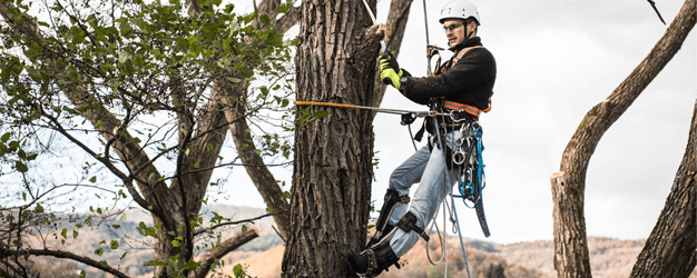 tree pruning proposal t1517 t1530 Tomvasduckdnsorg.