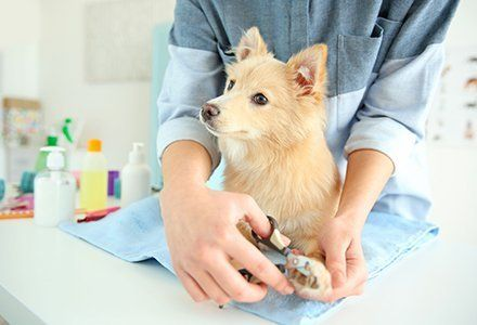 Image result for pet grooming