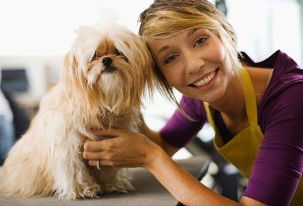 dog and pet groomer