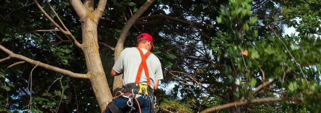 Tree & Stump Removal Orange County