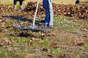Yard Cleanup Service
