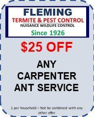 King of Prussia, PA-Carpenter Ants - Fleming Pest gets rid