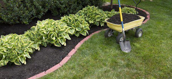 Quality Lawn And Garden Inc Holy Hosta Saint Louis Mo