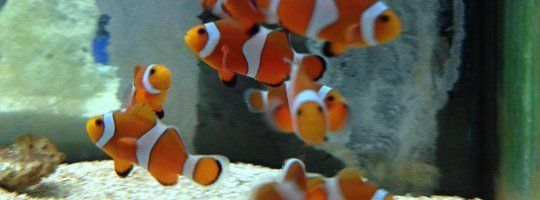 Saltwater Fish | Exotic Fishes | Naples, FL