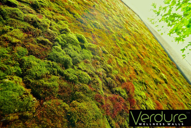 Live Indoor Moss Wellness Wall Living Plant Wall System