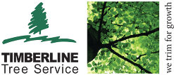 Timberline Tree Service Logo