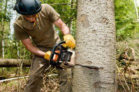 Chris Heller Tree Service | Tree Service | Tree Removal | Tree Trimming | Bellevue, NE