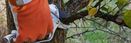 Chris Heller Tree Service | Tree Trimming | Tree Shaping | Bellevue, NE