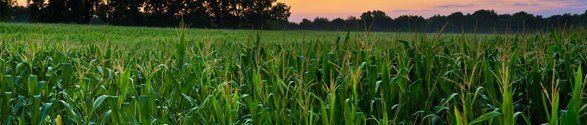 Beautiful crops