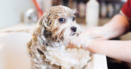 U dirty dawg dog daycare services greenwood in self service dog wash dog having a bath solutioingenieria Gallery