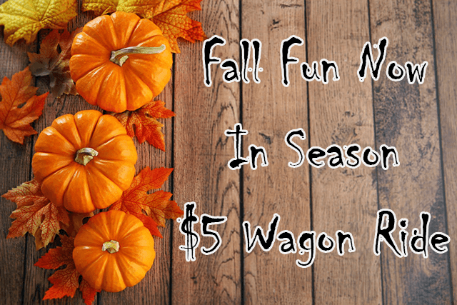 Fall Fun Now In Season