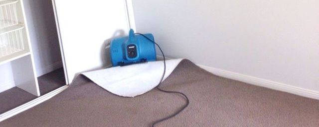 Best Carpet Cleaner For Water Damage Carpet Vidalondon