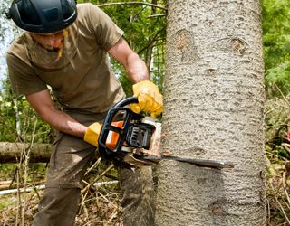 Arborists Service