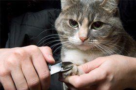 Cat Nail Cut