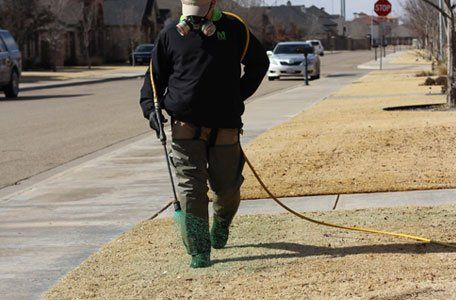 Turf insect control services