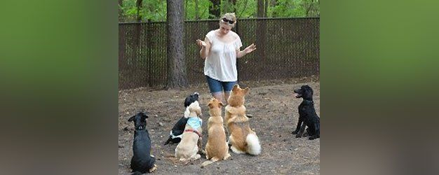 Obedience Classes with Kat Tedesco
