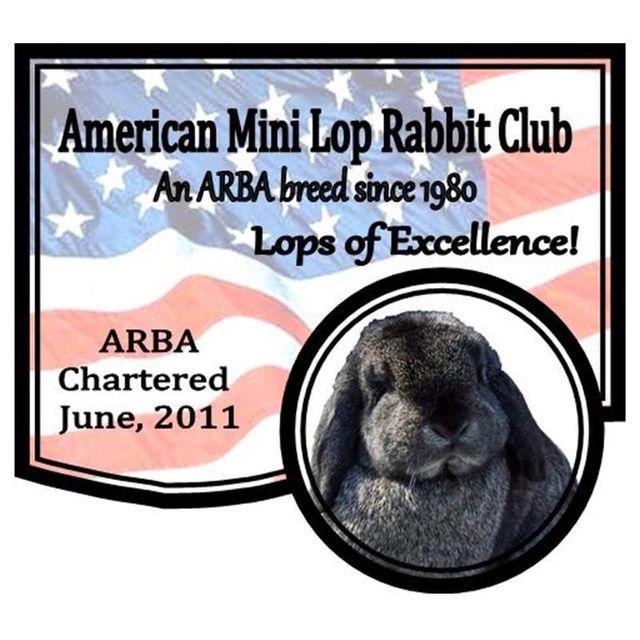 American Mini Lop Rabbit Club Photo Gallery